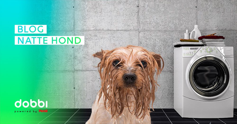 Hond naast wasmachine